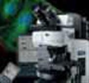 奥林巴斯荧光显微镜 CX31-12C02