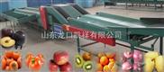 双通道猕猴桃自动选果机,苹果自动选果机,无挤伤柑桔选果机