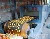 膨化锅巴自动生产线