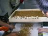 定做黄粉虫烘干机/大麦虫烘干机